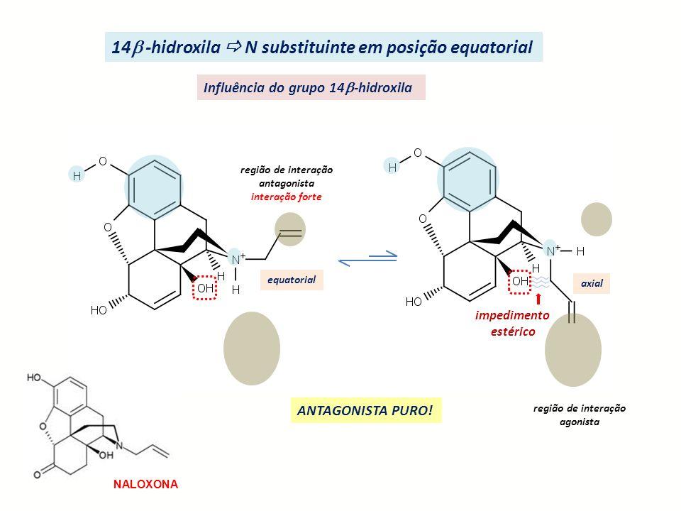 região de interação antagonista interação forte equatorial axial região de interação agonista impedimento estérico 14 -hidroxila N substituinte em pos