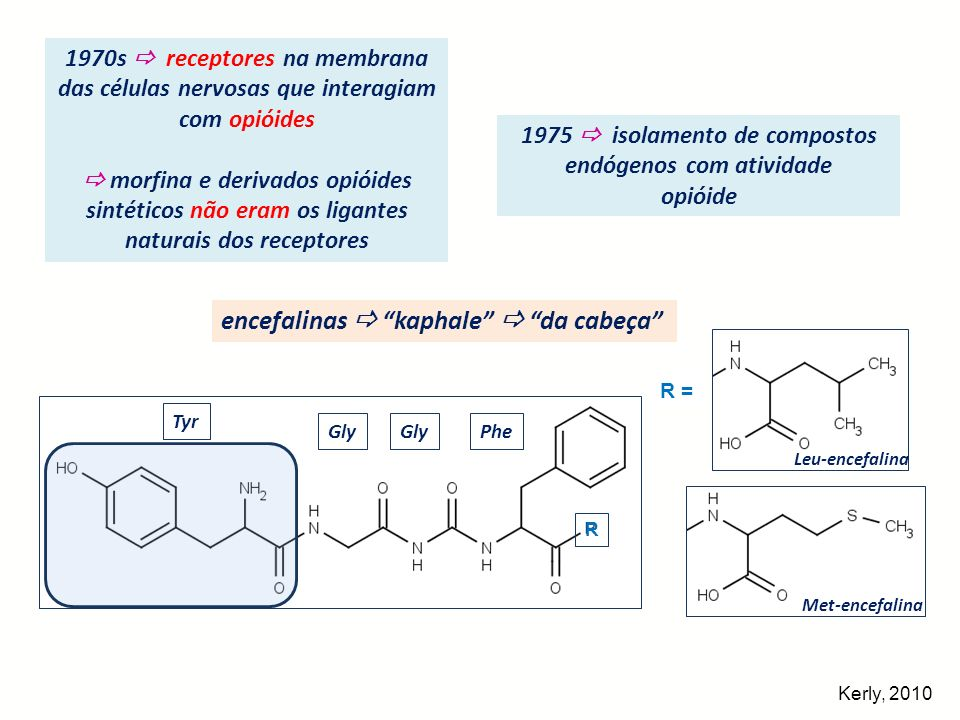 Identificação de outros opióides endógenos -endorfina dinorfinas endomorfinas (tetrapeptídios) Met-encefalina Leu-encefalina -endorfina dinorfina 1-17 dinorfina 1-8 dinorfina 1-13 α-neoendorfina -neoendorfina nociceptina (1995) -Met -Leu -Met-Thr-Ser-Glu-Lys-Ser 10 -Gln-Thr-Pro-Leu-Val-Thr-Leu-Phe-Lys-Asn 20 -Ala- Ile-Ile-Lys-Asn-Ala-Tyr-Lys-Lys-Gly-GluOH 31 -Leu-Arg-Arg-Ile-Arg-Pro-Lys-Leu-Lys-Trp-Asp-Asn-Gln -Leu-Arg-Arg-Ile -Leu-Arg-Arg-Ile-Arg-Pro-Lys-Leu-Lys -Leu-Arg-Lys-Tyr-Pro-Lys -Leu-Arg-Lys-Tyr-Pro = Phe-Gly-Gly-Phe-Thr-Gly-Ala-Arg-Lys-Ser-Ala-Arg-Lys-Leu-Ala-Asn-Gln R = 1 = OH-Tyr-Pro-Trp-Phe-NH 2 2 = OH-Tyr-Pro-Phe-Phe-NH 2 R Tyr Gly Phe Kerly, 2010