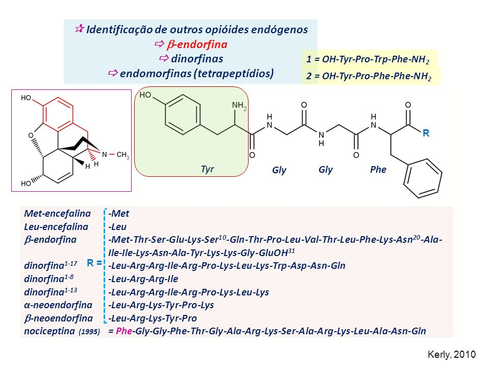 Identificação de outros opióides endógenos -endorfina dinorfinas endomorfinas (tetrapeptídios) Met-encefalina Leu-encefalina -endorfina dinorfina 1-17