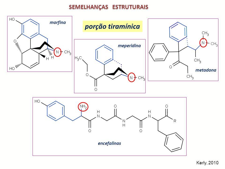 ESTRUTURA DA MORFINA – OPIÓIDE EXÓGENO morfina 3D 1 3 4 5 6 7 8 9 10 11 12 13 14 15 16 A D B E C caráter básico morfina forma de T configuração absoluta 5(R), 6(S), 9(R), 13(S), 14(R) isômero natural ( ) ou levorrotatório isômero (+ ) sintético e sem atividade analgésica Kerly, 2010