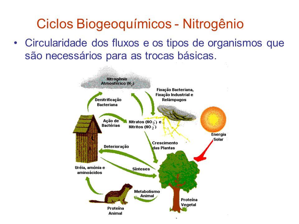 Circularidade dos fluxos e os tipos de organismos que são necessários para as trocas básicas. Ciclos Biogeoquímicos - Nitrogênio