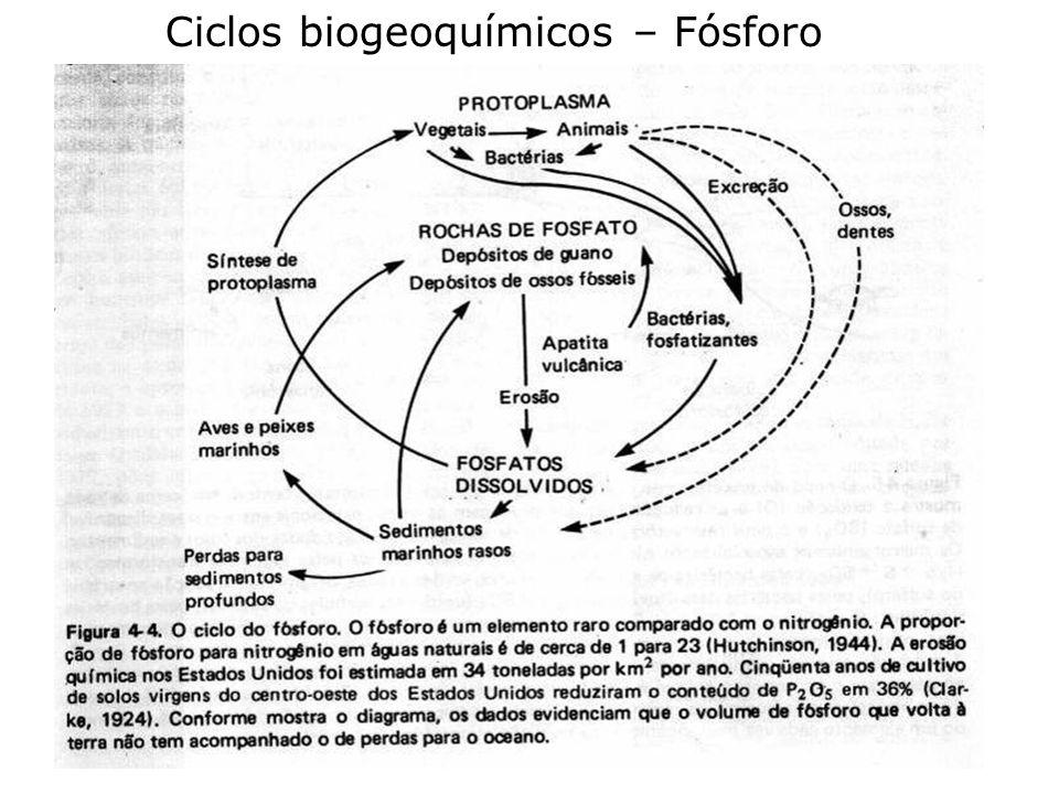 Ciclos biogeoquímicos – Fósforo