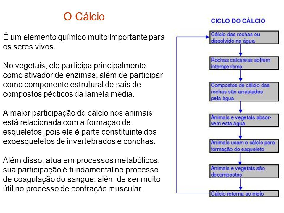 O Cálcio É um elemento químico muito importante para os seres vivos. No vegetais, ele participa principalmente como ativador de enzimas, além de parti