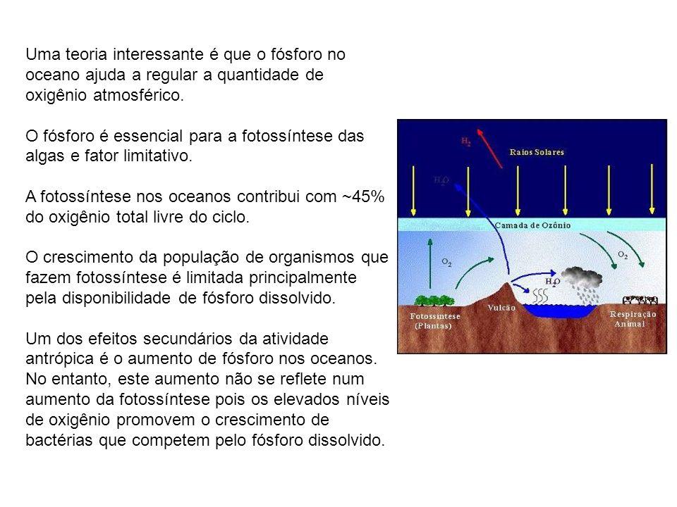 Uma teoria interessante é que o fósforo no oceano ajuda a regular a quantidade de oxigênio atmosférico. O fósforo é essencial para a fotossíntese das