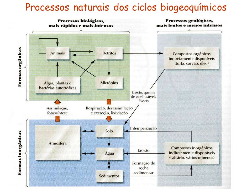 Processos naturais dos ciclos biogeoquímicos