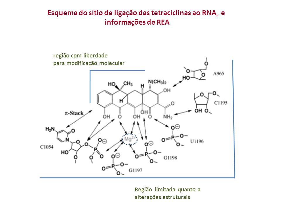 Esquema do sítio de ligação das tetraciclinas ao RNA r e informações de REA região com liberdade para modificação molecular Região limitada quanto a alterações estruturais