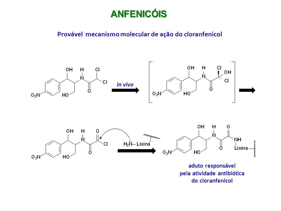 ANFENICÓIS Produtos de biotransformação do cloranfenicol sítio de glicuronidação sítio de redução O metabolismo, nesses casos, leva a produtos mais hidrossolúveis e inativos terapeuticamente, mas alguns tóxicos