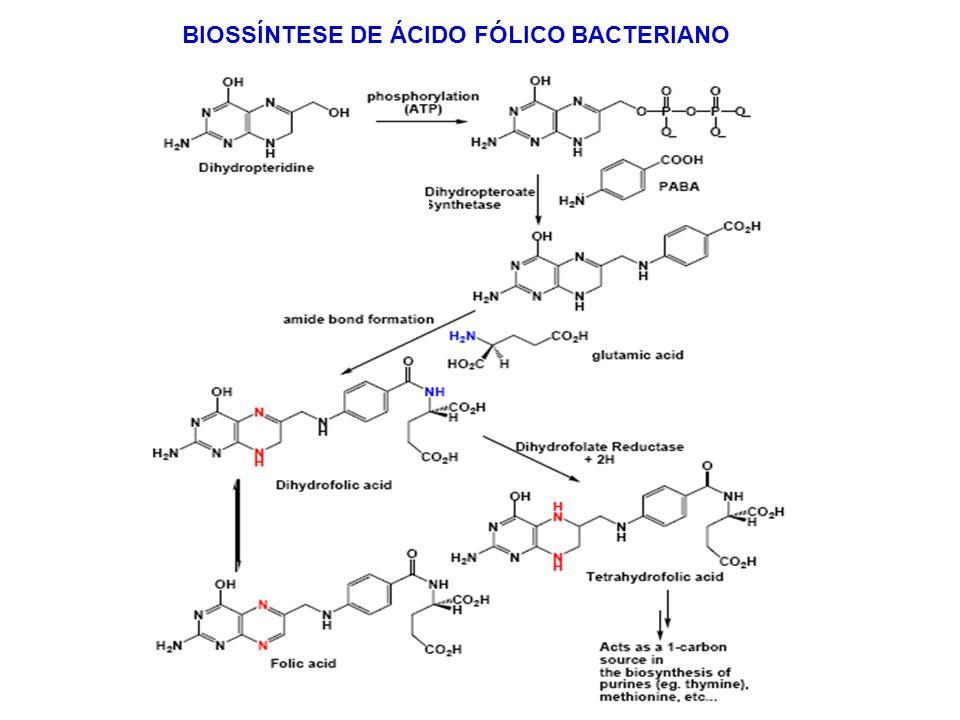 BIOSSÍNTESE DE ÁCIDO FÓLICO BACTERIANO