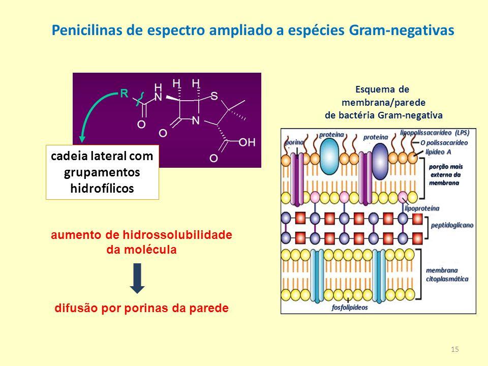 Esquema de membrana/parede de bactéria Gram-negativa membranacitoplasmática fosfolipídeos peptidoglicano lipoproteína porção mais externa da externa d