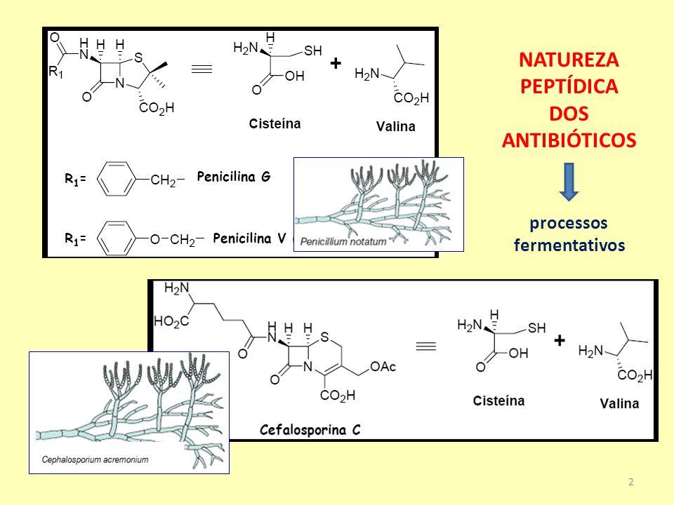Obtenção de matéria-prima para a semi-síntese dos antibióticos -lactâmicos penicilina G cefalosporina C processo de hidrólise enzimática seletiva Ácido 6-aminopenicilânico (6-APA) Ácido 7-aminocefalosporânico (7-ACA) 3