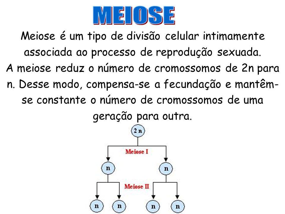 Meiose é um tipo de divisão celular intimamente associada ao processo de reprodução sexuada. A meiose reduz o número de cromossomos de 2n para n. Dess