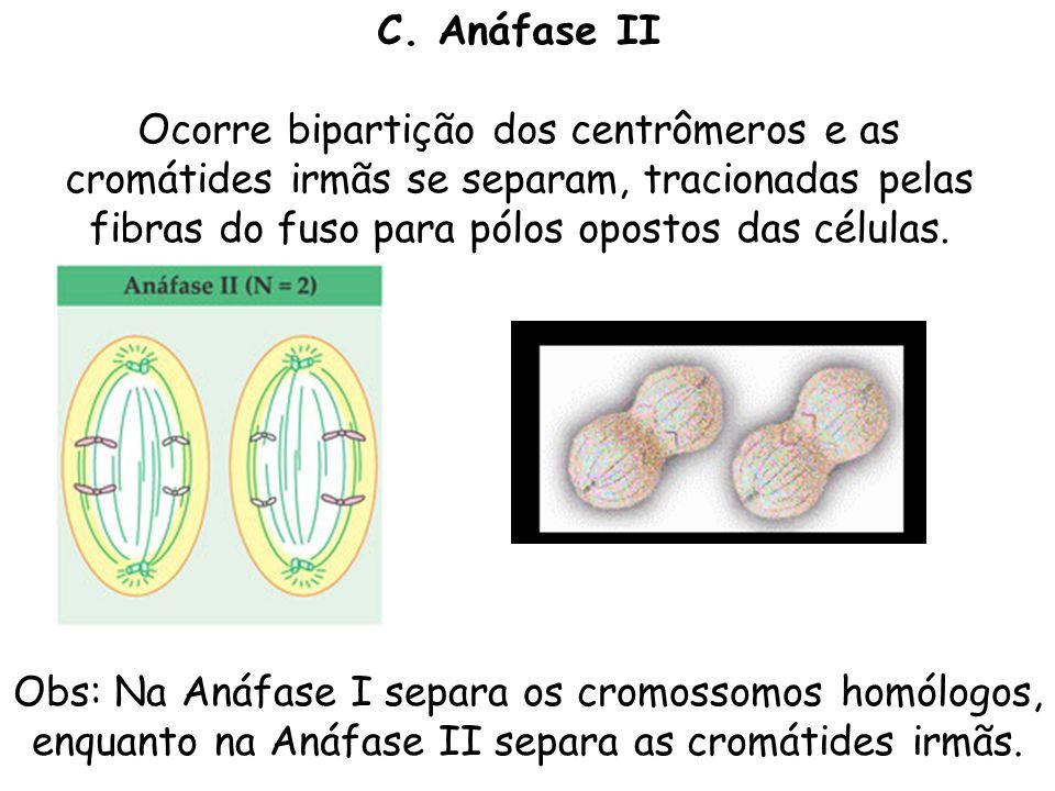 C. Anáfase II Ocorre bipartição dos centrômeros e as cromátides irmãs se separam, tracionadas pelas fibras do fuso para pólos opostos das células. Obs