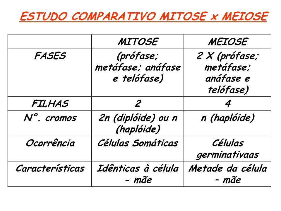 ESTUDO COMPARATIVO MITOSE x MEIOSE MITOSEMEIOSE FASES(prófase; metáfase; anáfase e telófase) 2 X (prófase; metáfase; anáfase e telófase) FILHAS24 N°.