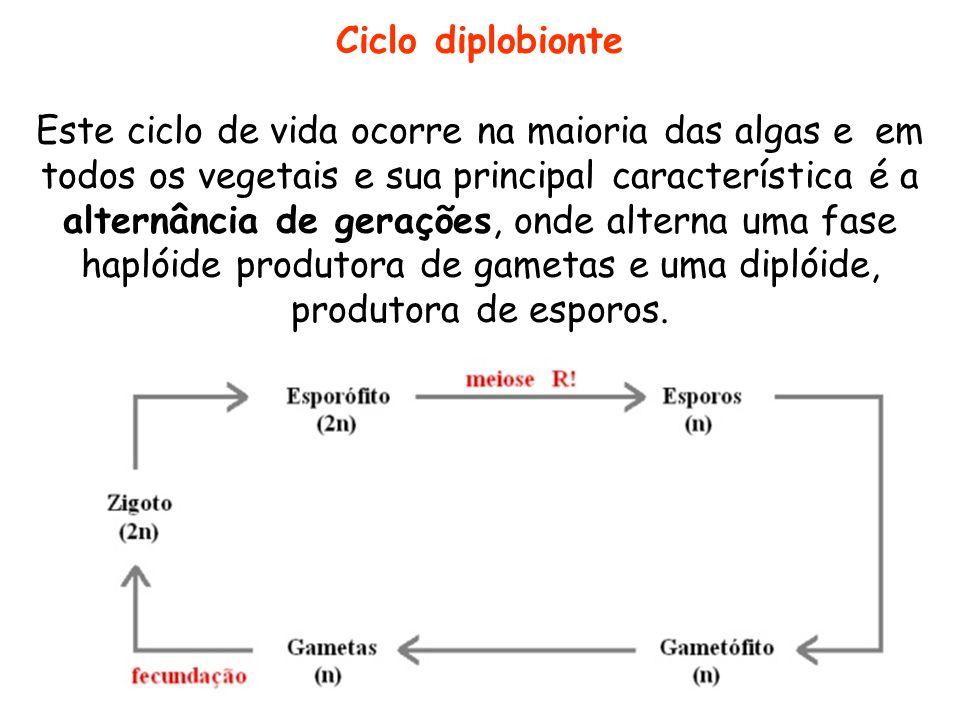 Ciclo diplobionte Este ciclo de vida ocorre na maioria das algas e em todos os vegetais e sua principal característica é a alternância de gerações, on