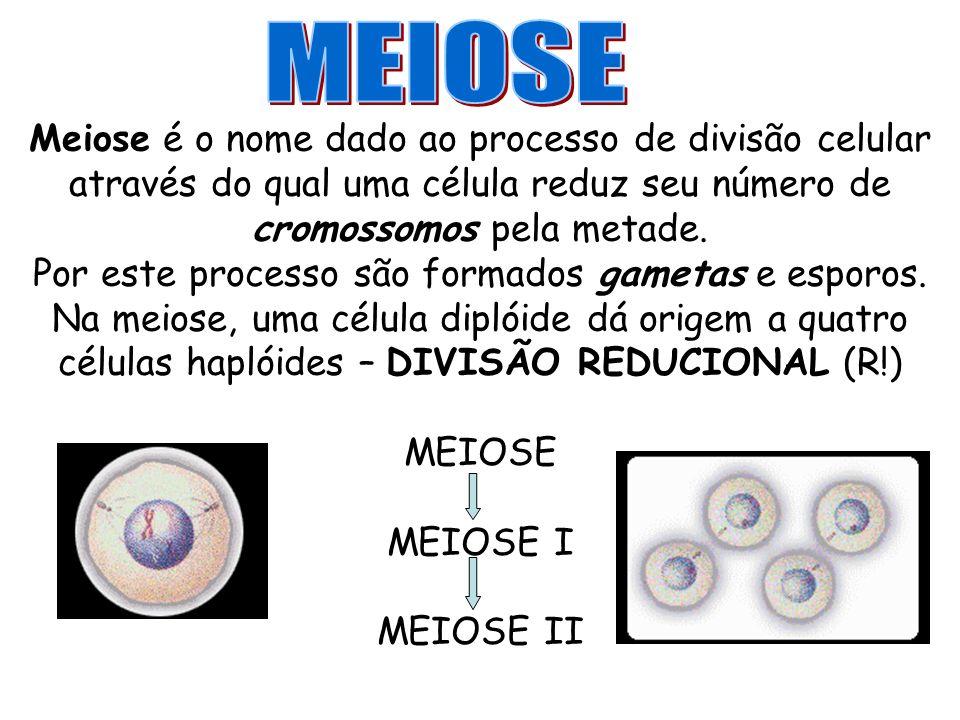 Meiose é o nome dado ao processo de divisão celular através do qual uma célula reduz seu número de cromossomos pela metade. Por este processo são form