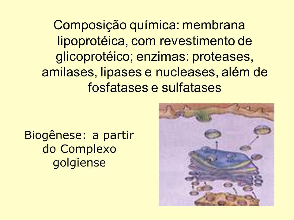 Composição química: membrana lipoprotéica, com revestimento de glicoprotéico; enzimas: proteases, amilases, lipases e nucleases, além de fosfatases e