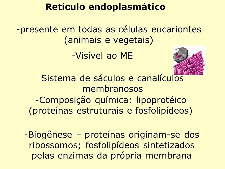 Retículo endoplasmático -presente em todas as células eucariontes (animais e vegetais) -Visível ao ME Sistema de sáculos e canalículos membranosos -Co