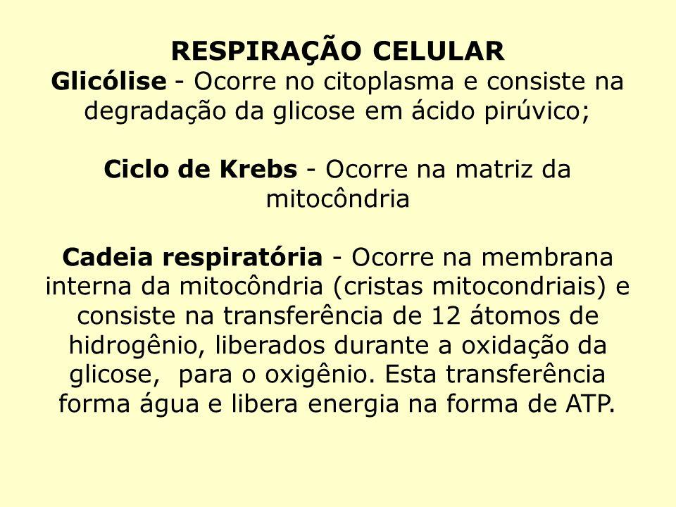 RESPIRAÇÃO CELULAR Glicólise - Ocorre no citoplasma e consiste na degradação da glicose em ácido pirúvico; Ciclo de Krebs - Ocorre na matriz da mitocô