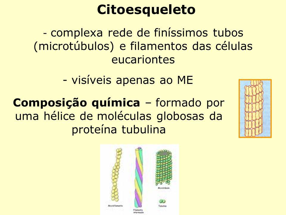 Citoesqueleto - complexa rede de finíssimos tubos (microtúbulos) e filamentos das células eucariontes - visíveis apenas ao ME Composição química – for