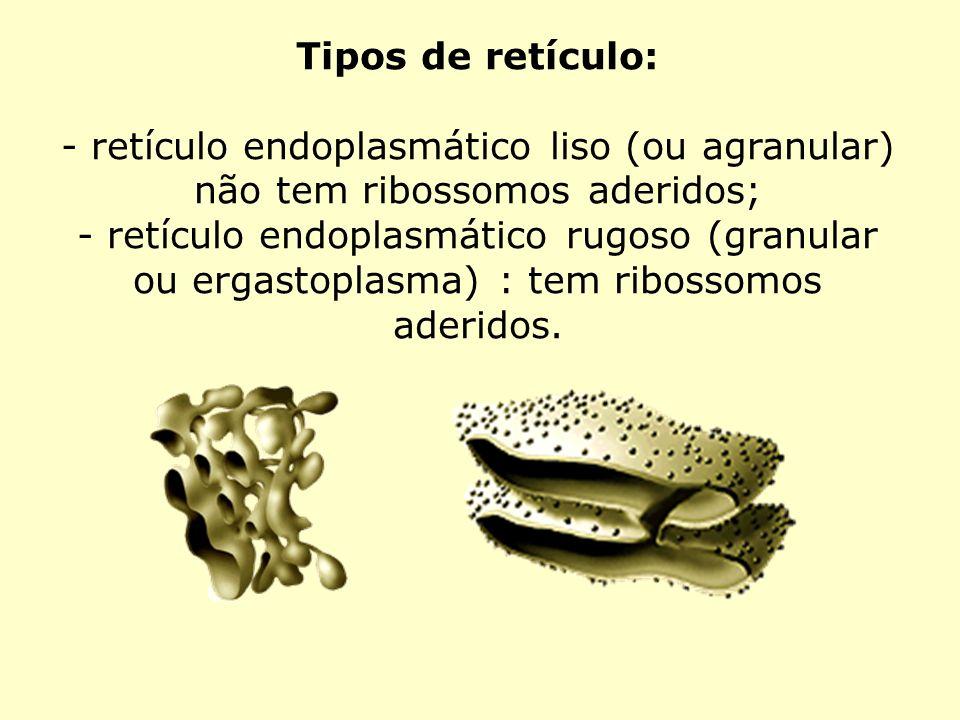Tipos de retículo: - retículo endoplasmático liso (ou agranular) não tem ribossomos aderidos; - retículo endoplasmático rugoso (granular ou ergastopla