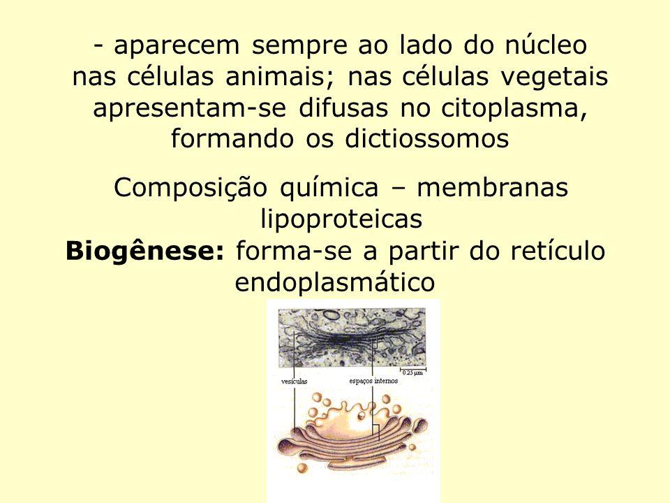 - aparecem sempre ao lado do núcleo nas células animais; nas células vegetais apresentam-se difusas no citoplasma, formando os dictiossomos Composição