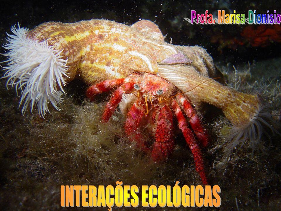 RELAÇÕES DESARMÔNICAS INTRA-ESPECÍFICAS CANIBALISMO Um animal mata outro da mesma espécie para dele se alimentar raro no mundo animal dos vertebrados Exemplos: aranhas, insetos, peixes
