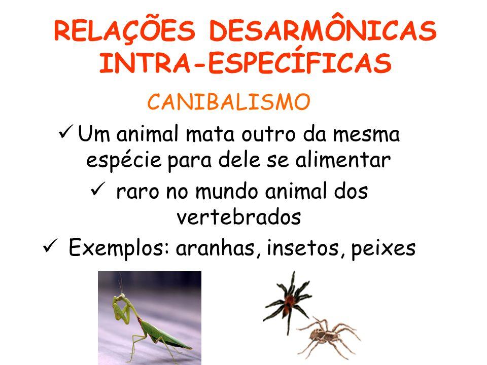 RELAÇÕES DESARMÔNICAS INTRA-ESPECÍFICAS CANIBALISMO Um animal mata outro da mesma espécie para dele se alimentar raro no mundo animal dos vertebrados