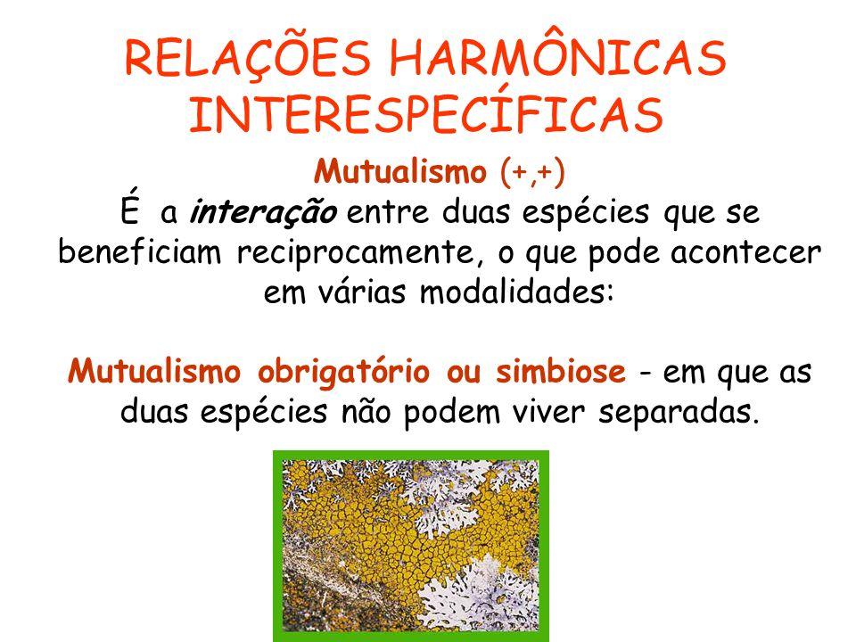 Mutualismo (+,+) É a interação entre duas espécies que se beneficiam reciprocamente, o que pode acontecer em várias modalidades: Mutualismo obrigatóri