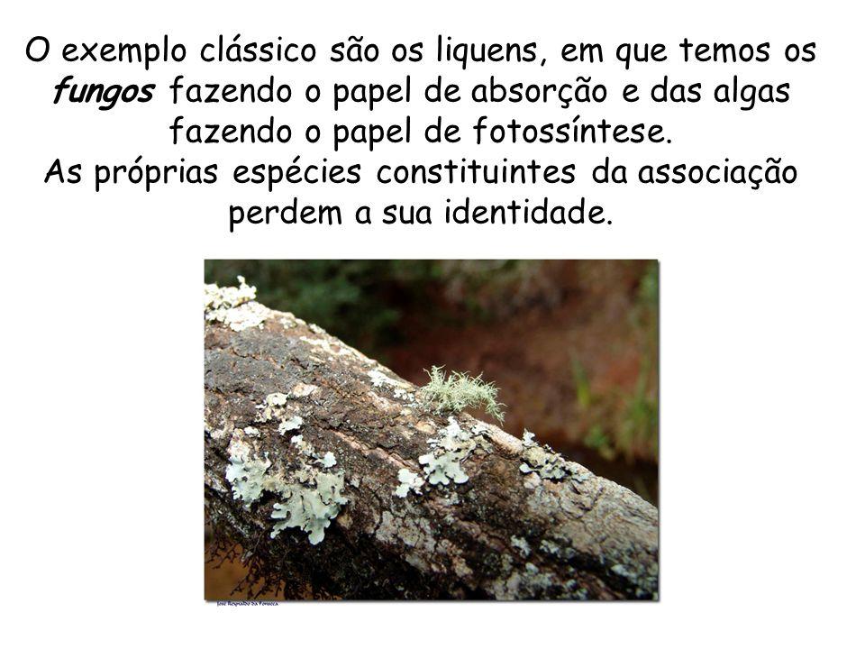 O exemplo clássico são os liquens, em que temos os fungos fazendo o papel de absorção e das algas fazendo o papel de fotossíntese. As próprias espécie