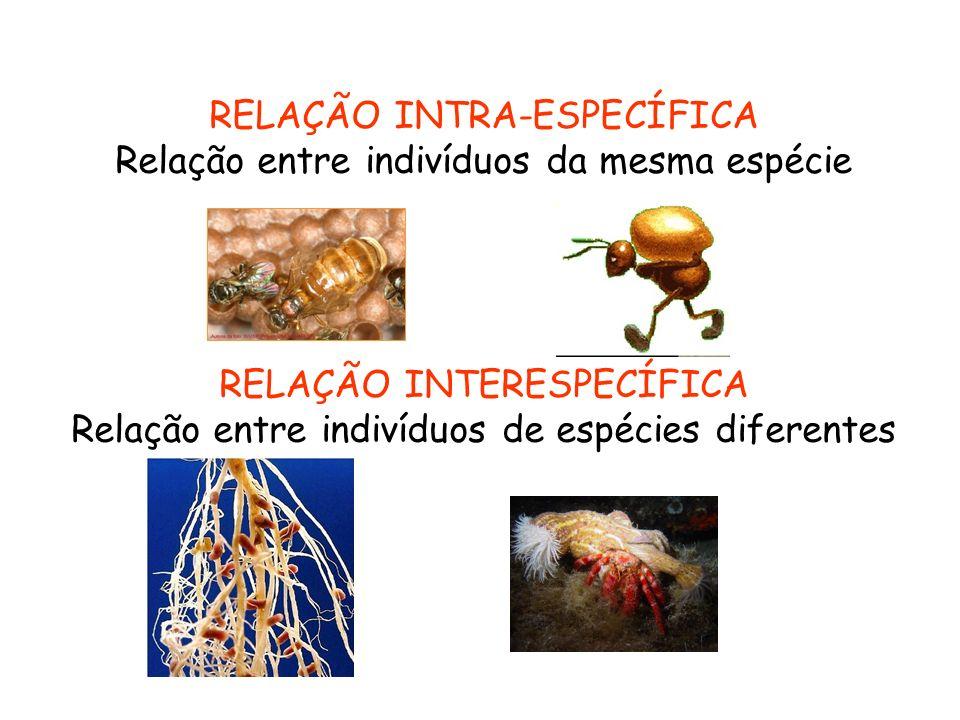 RELAÇÃO INTRA-ESPECÍFICA Relação entre indivíduos da mesma espécie RELAÇÃO INTERESPECÍFICA Relação entre indivíduos de espécies diferentes
