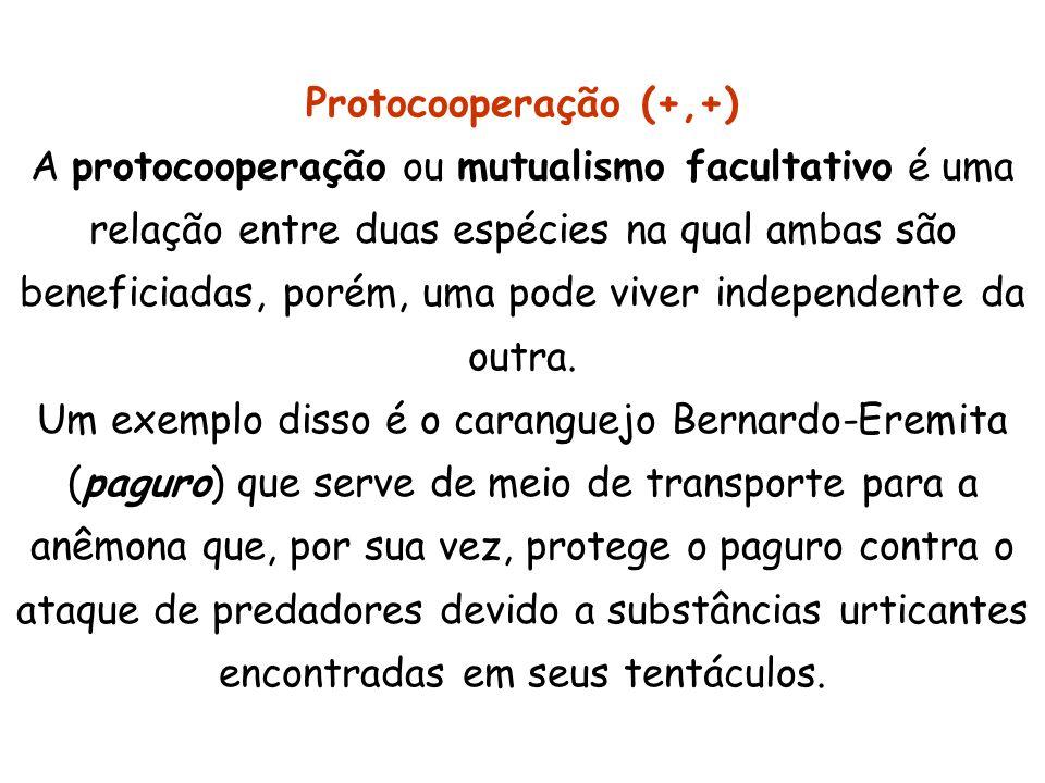 Protocooperação (+,+) A protocooperação ou mutualismo facultativo é uma relação entre duas espécies na qual ambas são beneficiadas, porém, uma pode vi