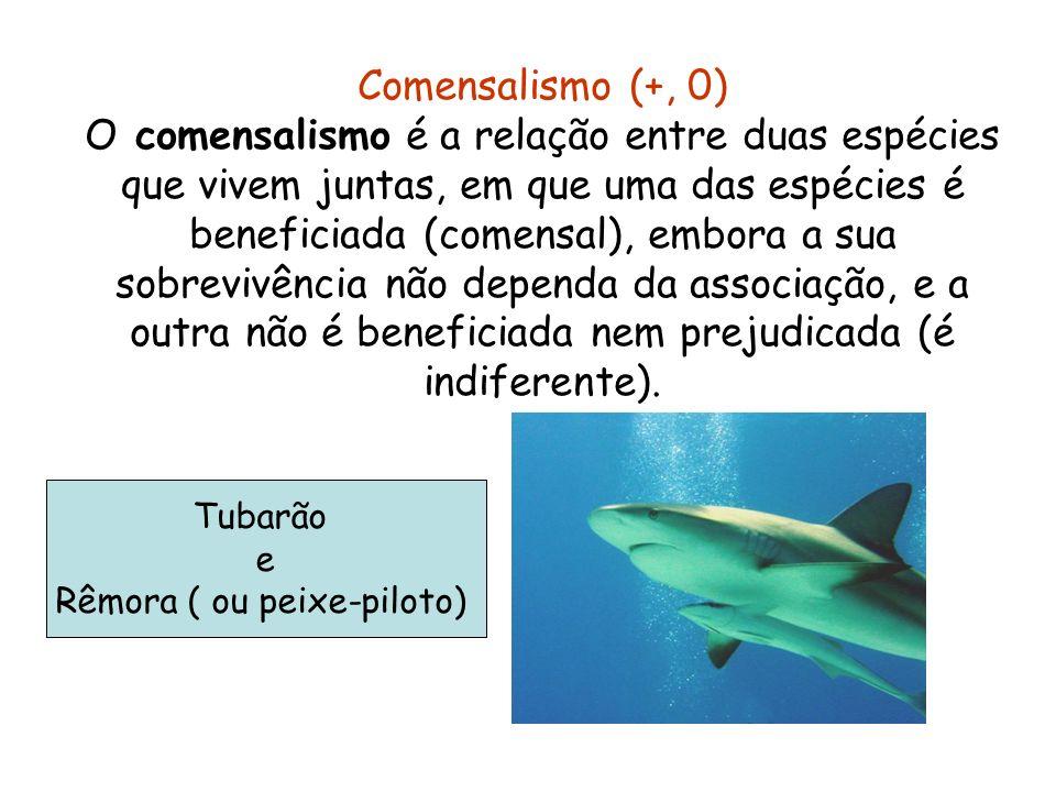 Comensalismo (+, 0) O comensalismo é a relação entre duas espécies que vivem juntas, em que uma das espécies é beneficiada (comensal), embora a sua so
