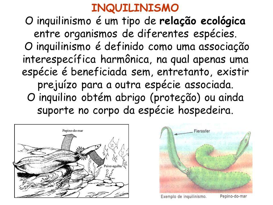 INQUILINISMO O inquilinismo é um tipo de relação ecológica entre organismos de diferentes espécies. O inquilinismo é definido como uma associação inte