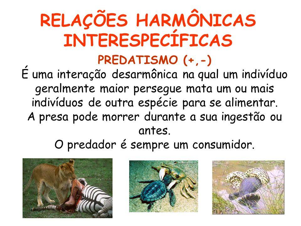 RELAÇÕES HARMÔNICAS INTERESPECÍFICAS PREDATISMO (+,-) É uma interação desarmônica na qual um indivíduo geralmente maior persegue mata um ou mais indiv