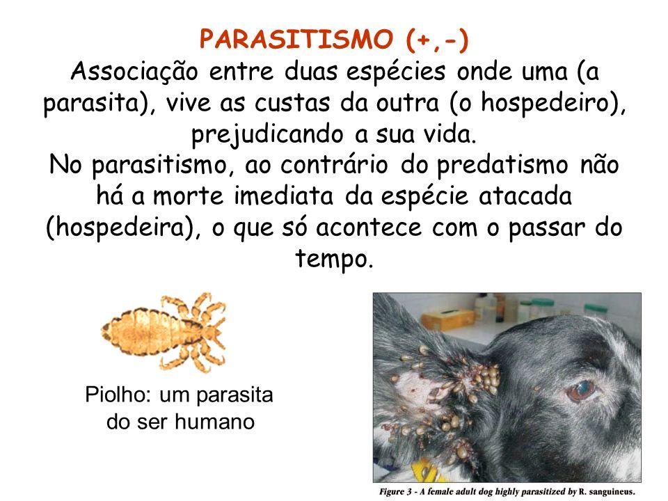 PARASITISMO (+,-) Associação entre duas espécies onde uma (a parasita), vive as custas da outra (o hospedeiro), prejudicando a sua vida. No parasitism