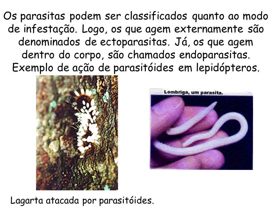 Os parasitas podem ser classificados quanto ao modo de infestação. Logo, os que agem externamente são denominados de ectoparasitas. Já, os que agem de