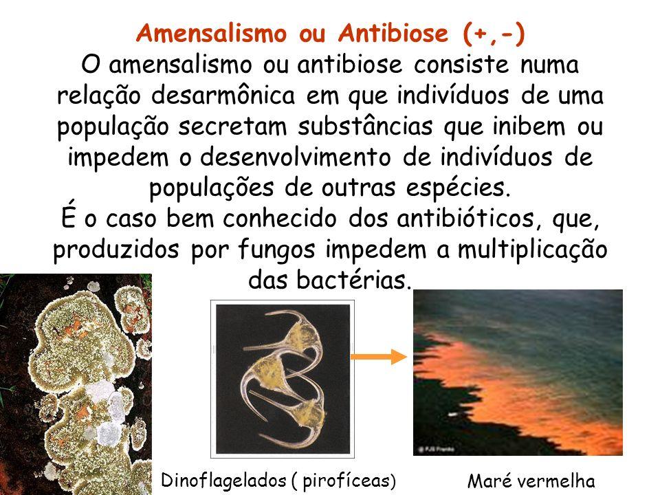 Amensalismo ou Antibiose (+,-) O amensalismo ou antibiose consiste numa relação desarmônica em que indivíduos de uma população secretam substâncias qu