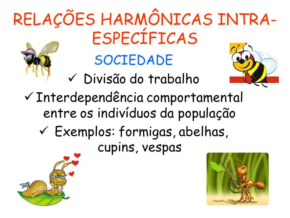 RELAÇÕES HARMÔNICAS INTRA- ESPECÍFICAS SOCIEDADE Divisão do trabalho Interdependência comportamental entre os indivíduos da população Exemplos: formig