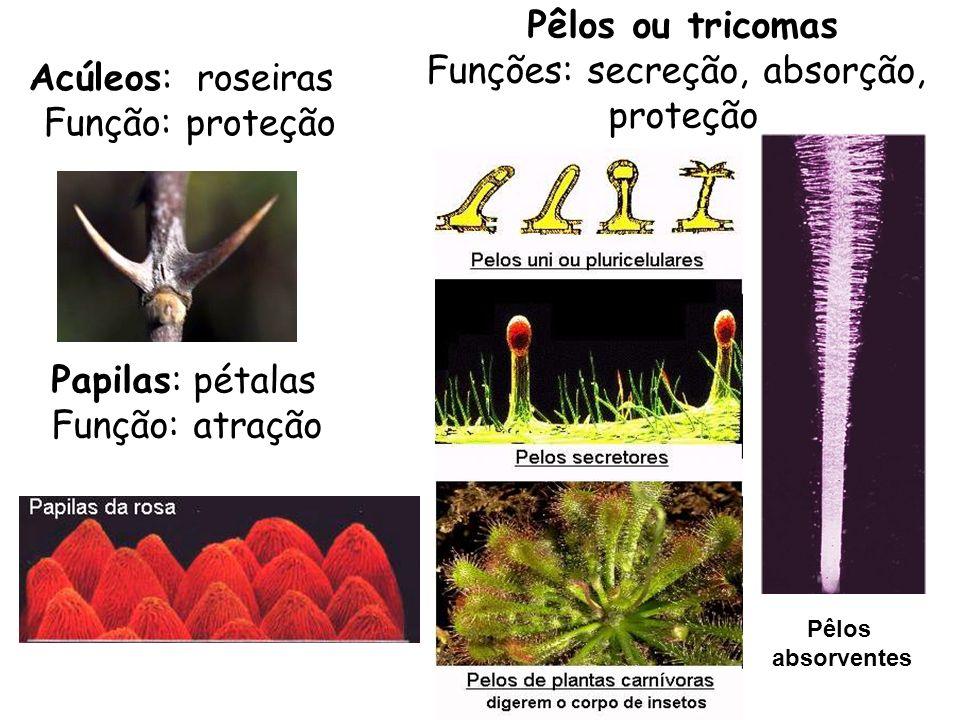 Acúleos: roseiras Função: proteção Pêlos ou tricomas Funções: secreção, absorção, proteção Pêlos absorventes Papilas: pétalas Função: atração