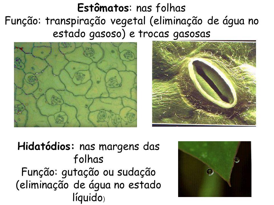 Estômatos: nas folhas Função: transpiração vegetal (eliminação de água no estado gasoso) e trocas gasosas Hidatódios: nas margens das folhas Função: g