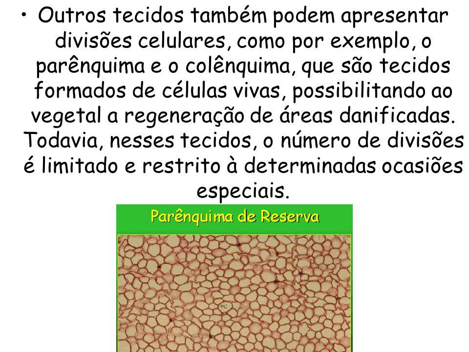 Outros tecidos também podem apresentar divisões celulares, como por exemplo, o parênquima e o colênquima, que são tecidos formados de células vivas, p