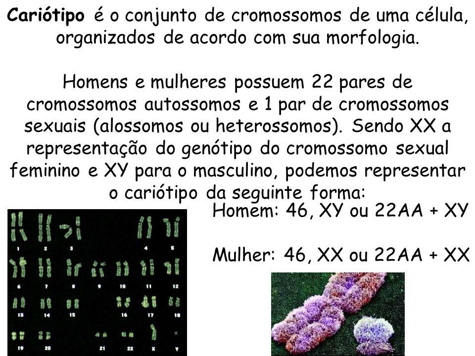 Cariótipo é o conjunto de cromossomos de uma célula, organizados de acordo com sua morfologia. Homens e mulheres possuem 22 pares de cromossomos autos