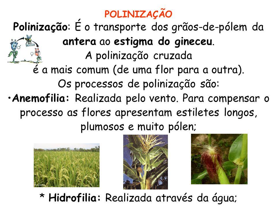 POLINIZAÇÃO Polinização: É o transporte dos grãos-de-pólem da antera ao estigma do gineceu. A polinização cruzada é a mais comum (de uma flor para a o