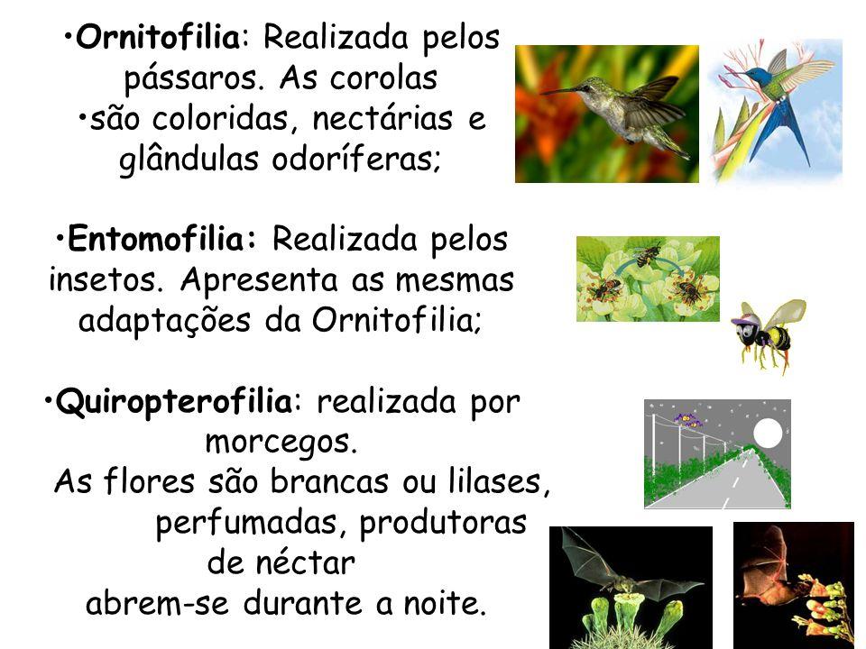 Ornitofilia: Realizada pelos pássaros. As corolas são coloridas, nectárias e glândulas odoríferas; Entomofilia: Realizada pelos insetos. Apresenta as