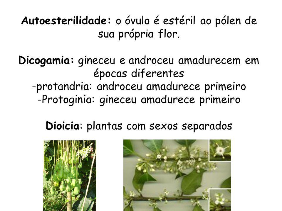 Autoesterilidade: o óvulo é estéril ao pólen de sua própria flor. Dicogamia: gineceu e androceu amadurecem em épocas diferentes -protandria: androceu