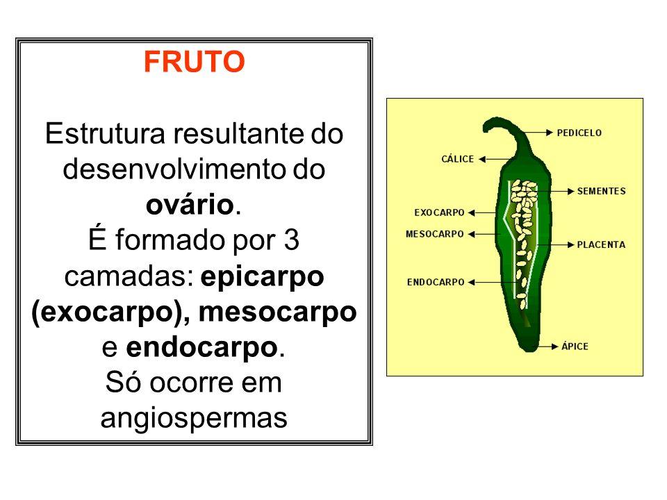 FRUTO Estrutura resultante do desenvolvimento do ovário. É formado por 3 camadas: epicarpo (exocarpo), mesocarpo e endocarpo. Só ocorre em angiosperma