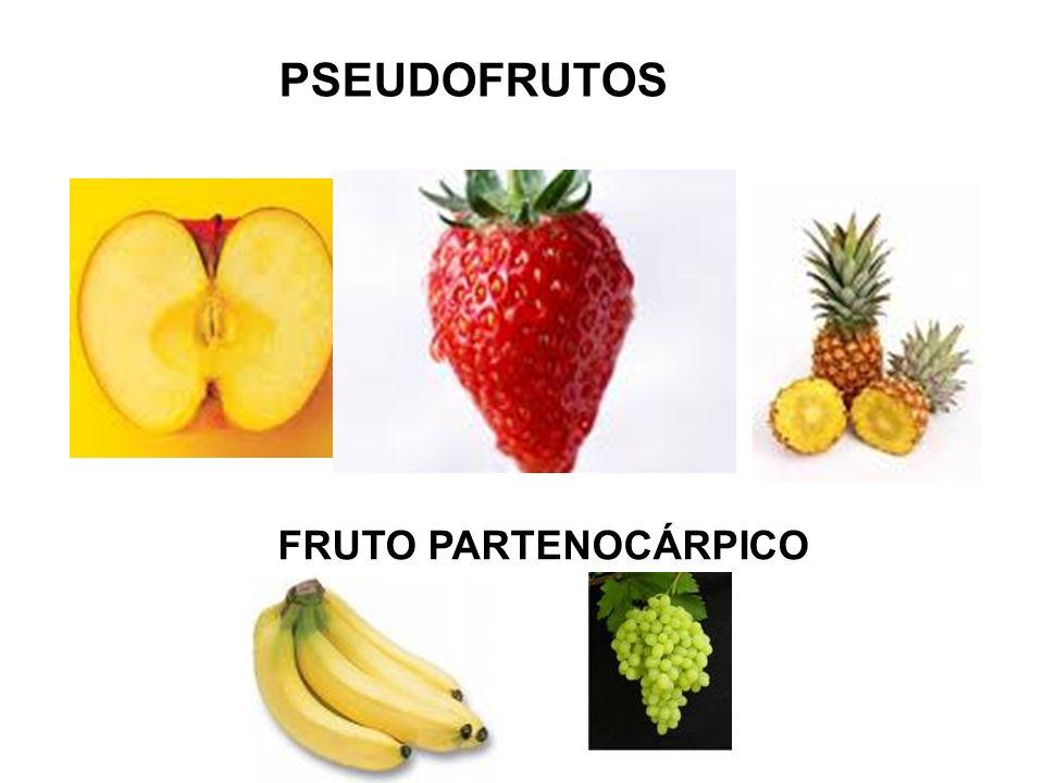 PSEUDOFRUTOS FRUTO PARTENOCÁRPICO