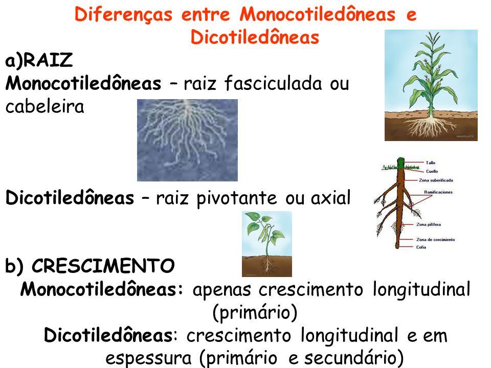 Diferenças entre Monocotiledôneas e Dicotiledôneas a)RAIZ Monocotiledôneas – raiz fasciculada ou cabeleira Dicotiledôneas – raiz pivotante ou axial b)