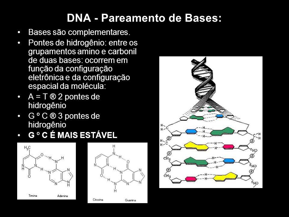 DNA - Pareamento de Bases: Bases são complementares. Pontes de hidrogênio: entre os grupamentos amino e carbonil de duas bases: ocorrem em função da c