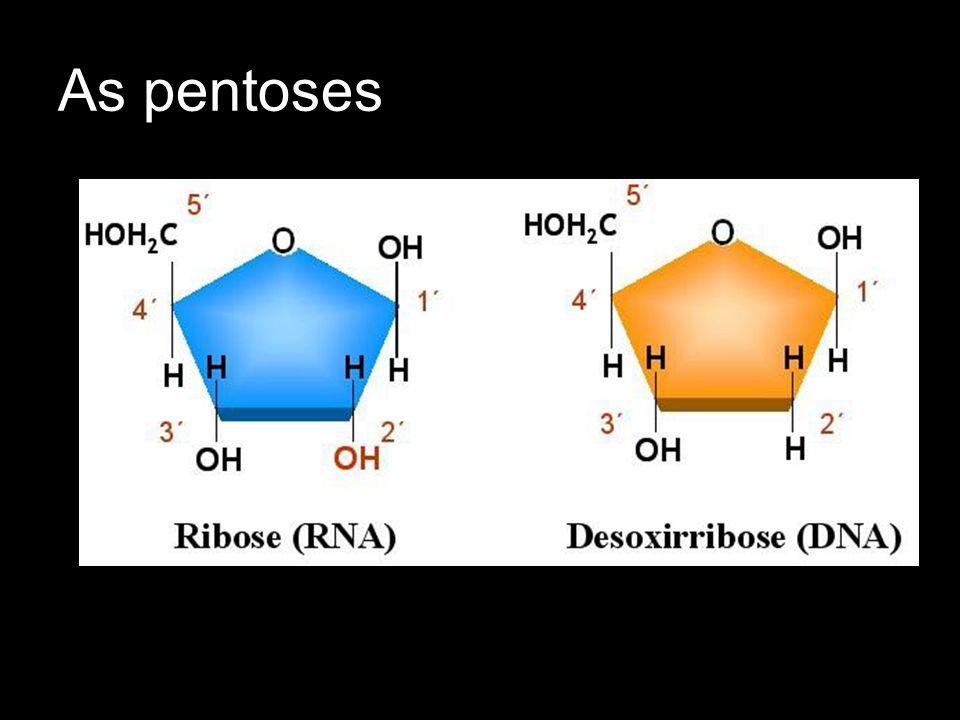 As Pentoses: A adição de uma pentose a uma base nitrogenada produz um nucleosídeo.